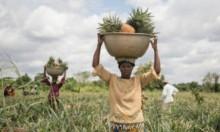صغار المزارعين الأفريقيين: ضحايا الاحتباس الحراري والجوع