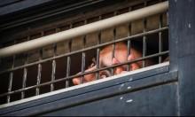 الاحتلال ينقل 57 أسيراً من سجن جلبوع إلى سجون أخرى