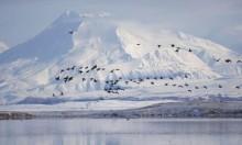 باحثون: التغير المناخي يؤدي إلى زيادة قياسية في تساقط الثلوج في ألاسكا