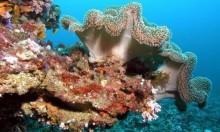 إنتاج مرجان مقاوم للاحتباس الحراري