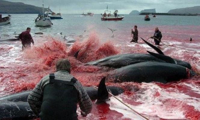 5 حيوانات بدائرة الخطر ويعتبر انقراضها كارثة