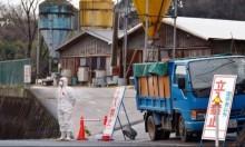"""""""إنفلونزا الطيور"""" يدفع  اليابان إلى إعدام 91 ألف دجاجة"""