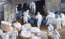 بريطانيا: رصد إصابات بإنفلونزا الطيور