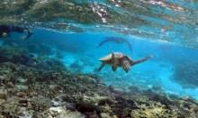 قلق بسبب إرتفاع درجات الحرارة عند الحاجز المرجاني العظيم