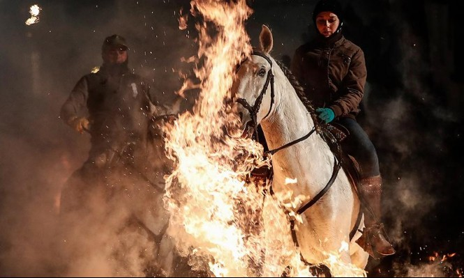 """خيول  فوق النيران في مهرجان مدينة """"آبلة"""" الإسبانية"""