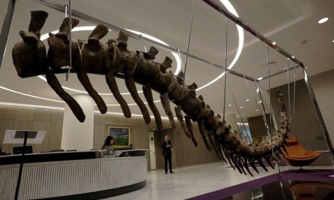 بيع ذيل ديناصور بالمكسيك لإعادة بناء مدارس دمرها الزلزال