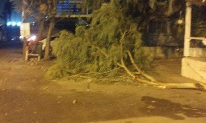 العاصفة تضرب البلاد: رياح عاتية واقتلاع أشجار وإغلاق شوارع