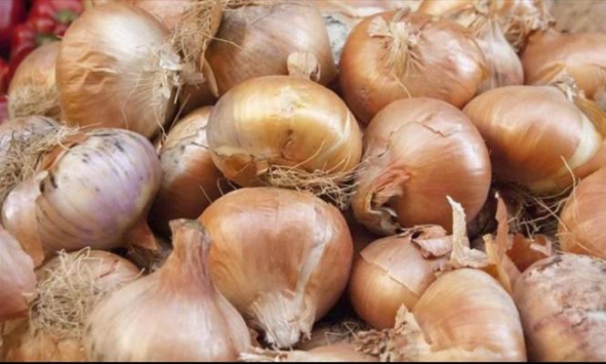 باحثون: البصل  يحد من الإصابة بالسل المقاوم للعقاقير