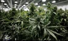 """السماح لسكان ولاية """"فيرمونت"""" الأميركية بتعاطي الماريجوانا"""
