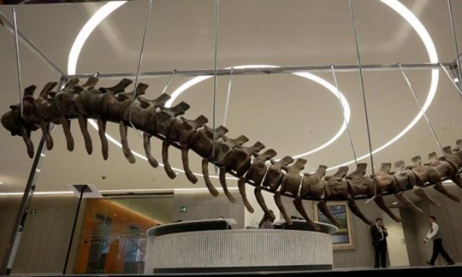 بعد منصوراصورس.. باحثون مصريون يأملون في اكتشاف ديناصورات أخرى
