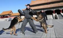 """في """"عام الكلب"""": لا إجازات للكلاب في المدينة المحرمة بالصين"""