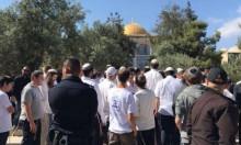 مستوطنون يقتحمون الأقصى والمفتي يكشف للفرنسيين انتهاكات الاحتلال