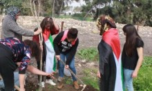 اقتلاع أشتال الزيتون في قرية اللجون المهجرة