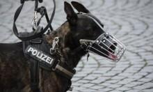 رغم اعتماده عليها: الجيش الأميركي يسيء معاملة الكلاب