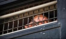 لليوم العشرين: المعتقلون الإداريون يواصلون مقاطعتهم لمحاكم الاحتلال