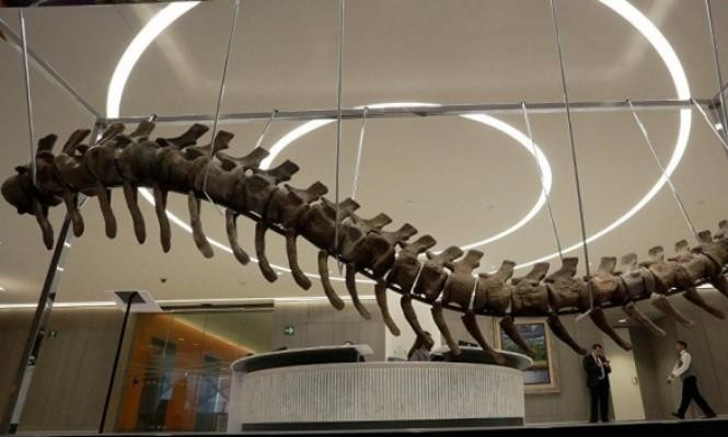 حفرية هيكل عظمي لديناصور غامض للبيع في مزاد بباريس
