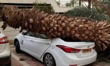 الرياح الشديدة تقتلع الأشجار وتتسبب بأضرار للسيارات