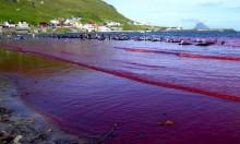 جزر فارو.. حينما يغرق البحر بالدماء سنويا!