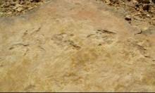 اكتشاف آثار نادرة لأقدام ديناصورات على جزيرة سكاي الأسكتلندية