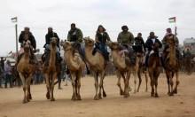 مجموعة من الفلسطينيّين يتسابقون بالجِمال في غزة