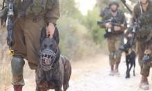 """""""بتسيلم"""": الجيش استخدم القوة المميتة بغزة دون مبرر"""