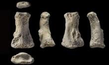 اكتشاف أحفورة للإنسان الأول تعود لـ90 ألف عام