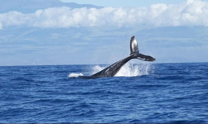 """""""الحوت الأزرق"""" يدفع العشرات للانتحار"""
