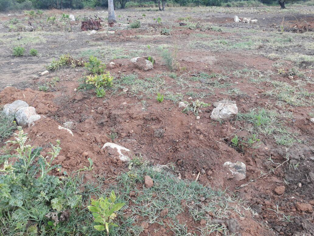 العشرات يتصدون لمحاولة نبش القبور في مقبرة القسام