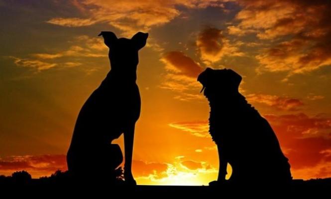 الكلب الآلي يُقدِّم أملا لمساعدة من يعانون العته