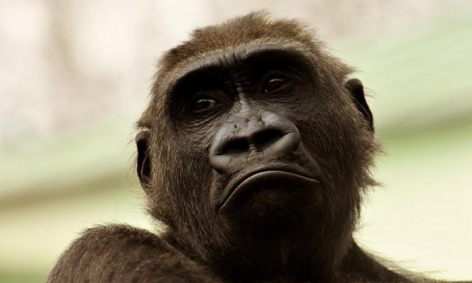 دراسة: الحيوانات المعرضة للانقراض هي الحيوانات التي نحب