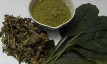 المكملات الغذائية التي تحتوي على الشاي الأخضر قد تضر الكبد