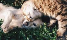 """ظاهرة إحراق الكلاب والقطط في احتفالات """"عيد الشعلة"""" اليهودي"""