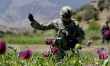 أفغانستان: 6.6 مليار دولار قيمة الأفيون للعام الماضي