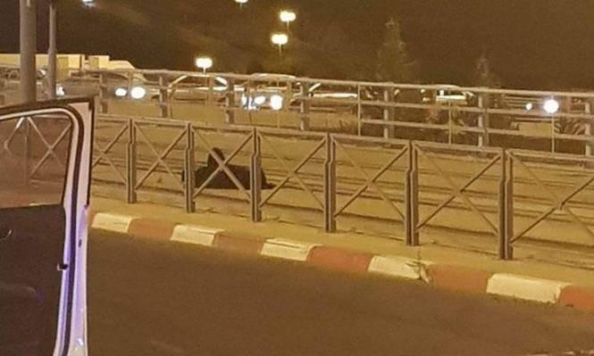 الاحتلال يقرر الإفراج عن المعتقلة الشحاتيت دون النظر بالقضية