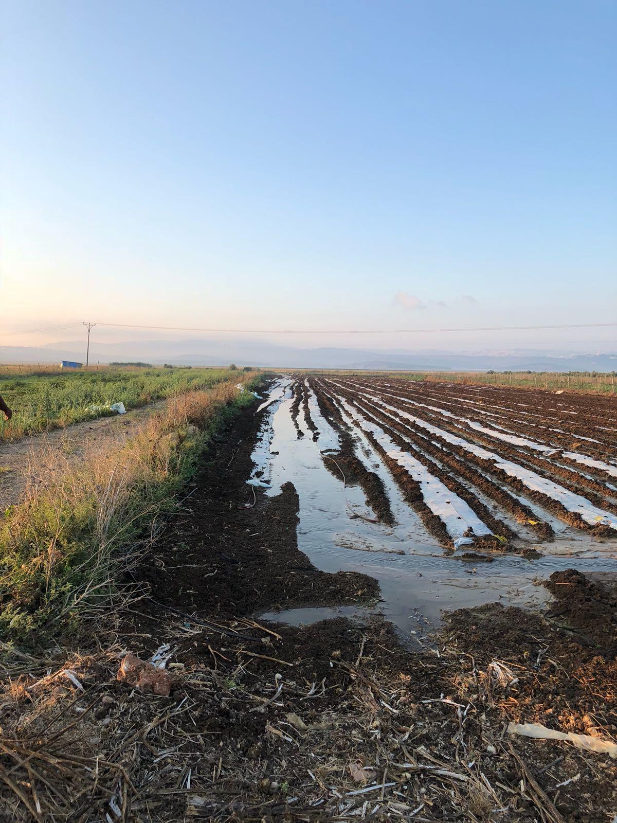 كفر مندا: المياه العادمة تتلف المزروعات وتلحق خسائر فادحة