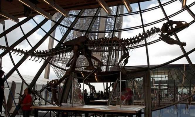 هيكل ديناصور من سلالة جديدة يُباع بأكثر من مليوني دولار