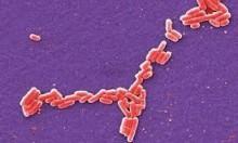 علماء يرسمون خرائط جينية لأكثر من 3000 بكتيريا خطيرة