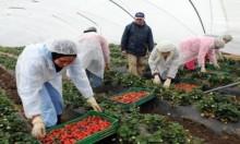 اعتداءات جنسية على عاملات مغربيات في حقول الفراولة بإسبانيا