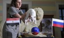 """مصر أم روسيا: القط """"أخيل"""" يتنبأ الفائز!"""