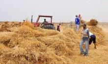 اعتقال 13 فلسطينيا والاحتلال يمنع مزارعين من حصاد المحاصيل
