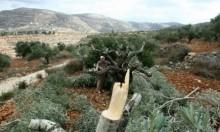 مستوطنون يقلعون مئات الأشجار والاحتلال يهدم خيمة بسوسيا