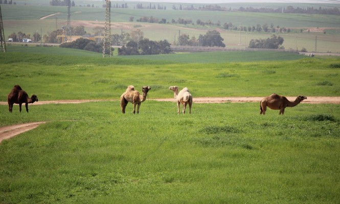 """الزبارقة: هل أوصت """"لجنة القحط"""" بتعويض المزارعين العرب؟"""