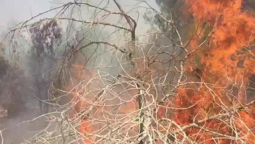 بسبب موجة الحر الشديد: حرائق في مختلف أنحاء البلاد