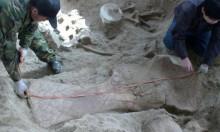 """استخراج حفرية لأقدم ديناصور من سلالة """"سوربورد"""""""