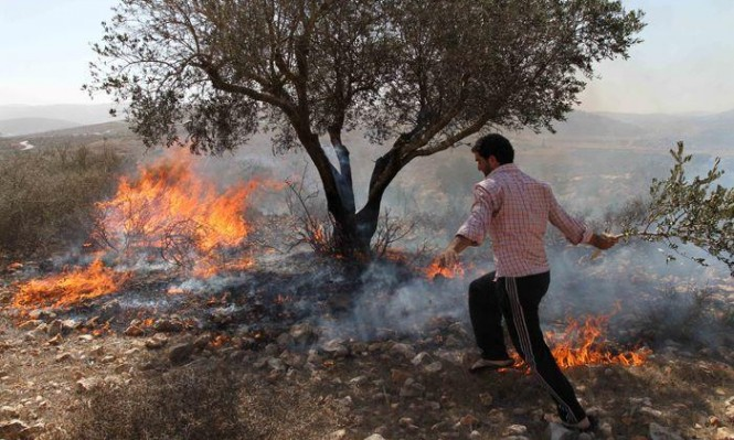 نابلس: مستوطنون يحرقون منزلا وحقولا للقمح