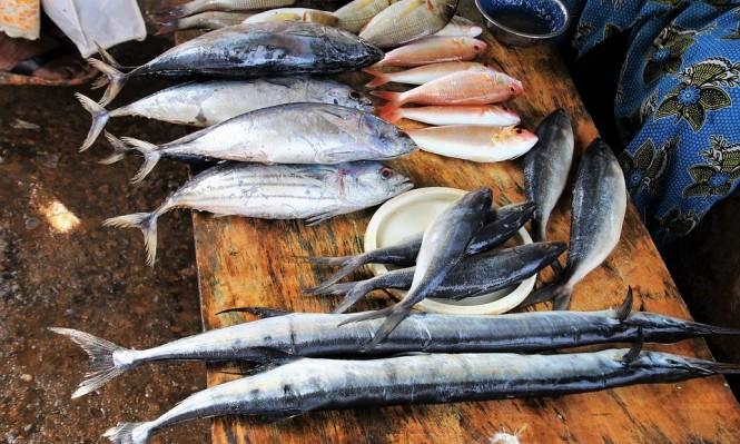 الأسماك الدهنية تحمي الحوامل من الولادة المبكرة