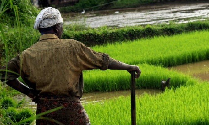 دراسة: تزويد المزارعين بنظارات للرؤية يساعدهم بعملهم
