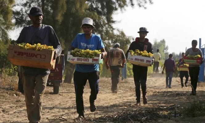 منحة دولية لتوفير 4400 فرصة عمل للشباب بغزة