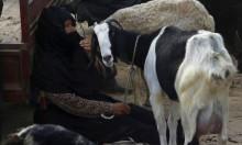 الأضاحي في غزة بين فكيّ الحصار الإسرائيلي وعقوبات السلطة