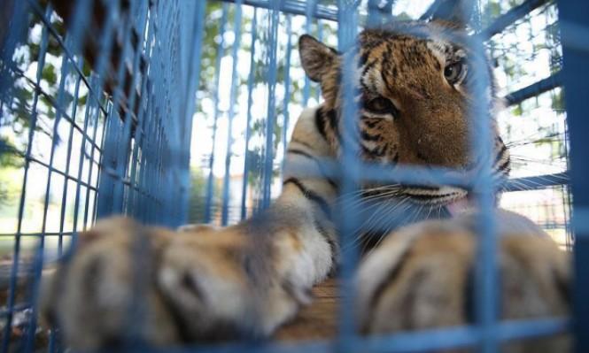 حديقة حيوانات هندية تنوي تركيب أقفاص بشرية